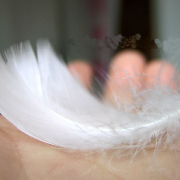 All Kinds of Pure White Goose Feather