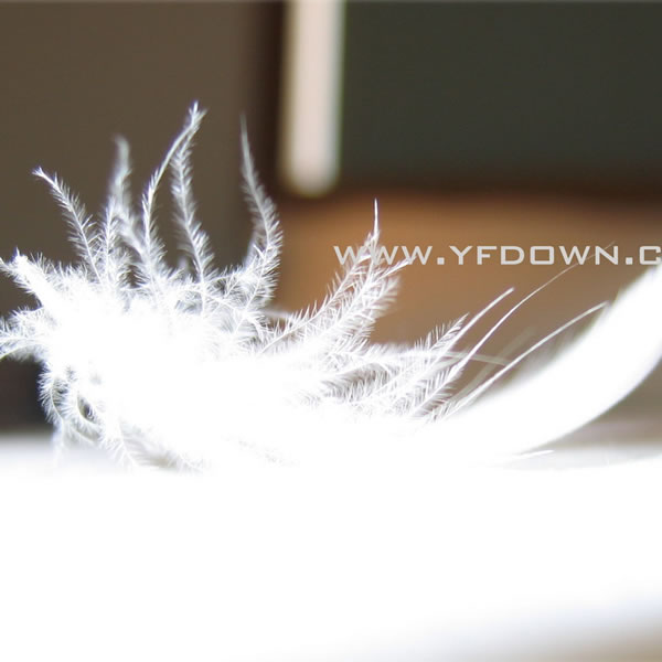 All Kinds of Pure White Duck Feather